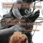 humor imagination